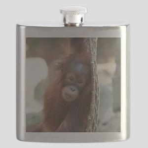 OrangUtan20151004 Flask