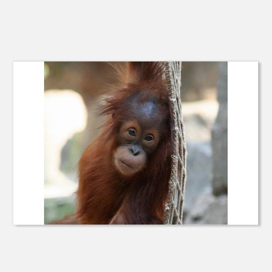 OrangUtan20151004 Postcards (Package of 8)