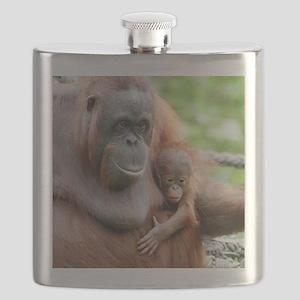 OrangUtan20151006 Flask