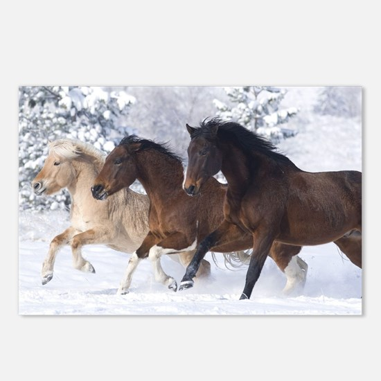 Horses Running In The Snow Postcards (Package of 8