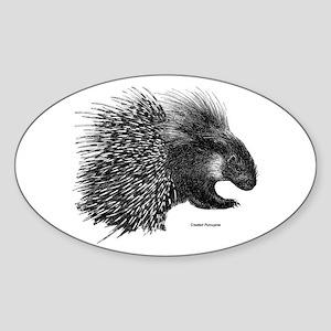 Crested Porcupine Oval Sticker