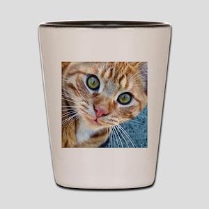 Crazy Kitty Shot Glass