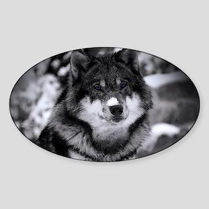 Grey Wolf In Snow Sticker