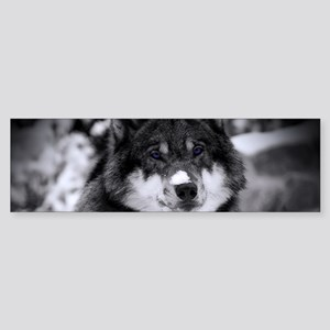 Grey Wolf In Snow Bumper Sticker