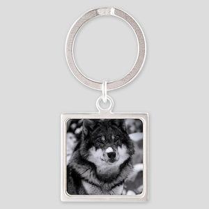 Grey Wolf In Snow Keychains