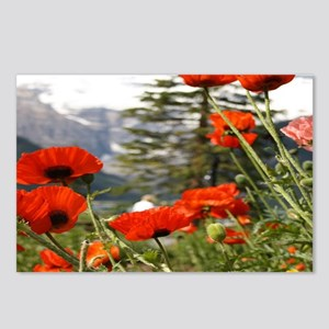 bold red poppy flower Postcards (Package of 8)