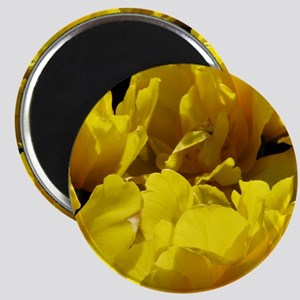 Yellow Tulips Sun and Shadows Magnet