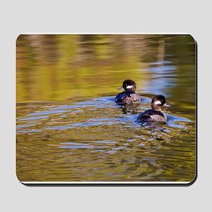 Bufflehead swimming Mousepad