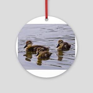 mallard ducklings, Anas platyrhynchos Round Orname