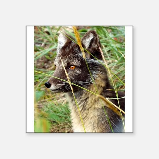 Watchful Fox Sticker