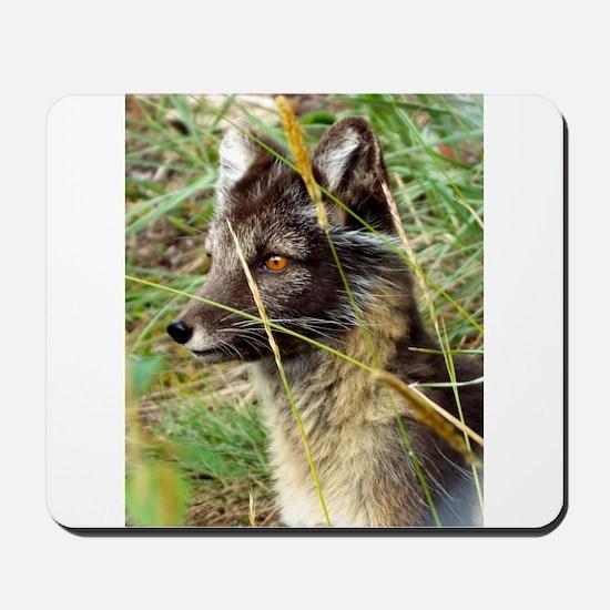 Watchful Fox Mousepad