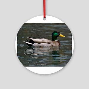 male mallard swimming Round Ornament