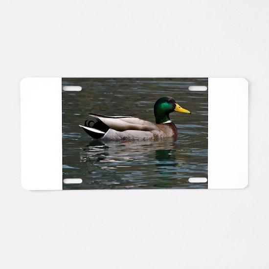 male mallard swimming Aluminum License Plate