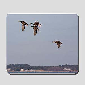 Mallards in flight Mousepad