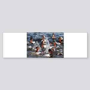 Canvas backs Bumper Sticker