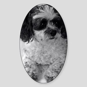Black Gray White Shih Tzu Poodle Mi Sticker (Oval)
