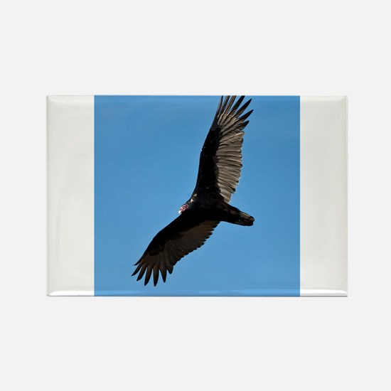 Turkey vulture Magnets