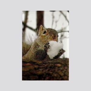 Squirrel Snowcone Magnets