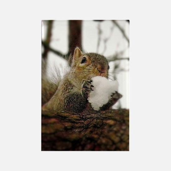 Squirrel Snowcone Magnets