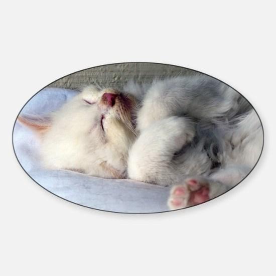Sleepy Kitten Decal