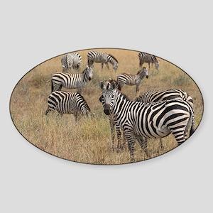 Zebras Sticker (Oval)