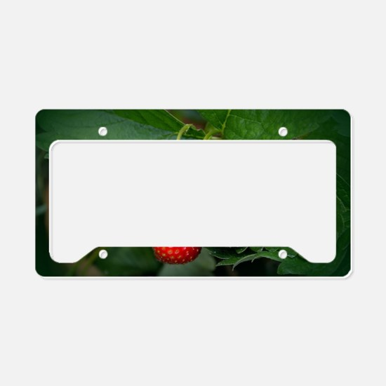 Strawberries License Plate Holder