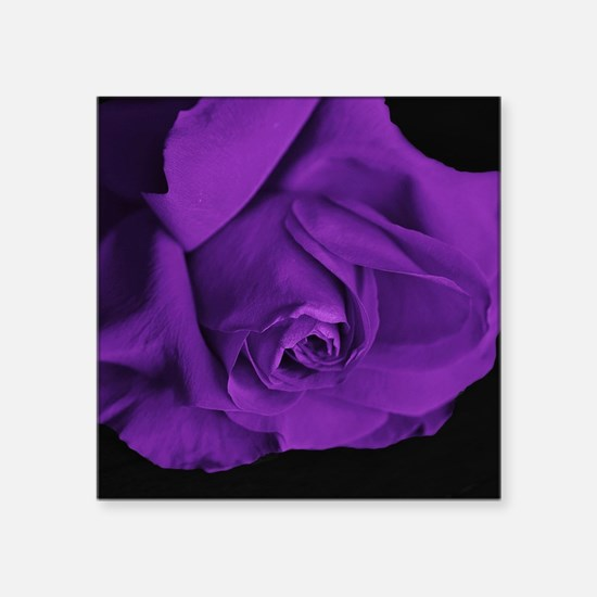 "Purple Roses Square Sticker 3"" x 3"""