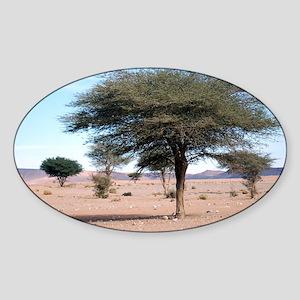 Morocco desert Sticker (Oval)