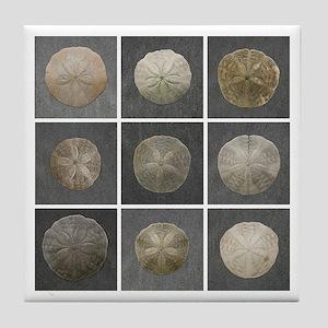 Wingaersheek Sand Dollar Tile Coaster