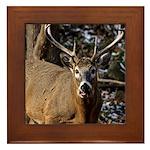 Winter Buck Framed Tile