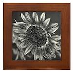 Black & White Sunflower Framed Tile