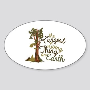 Largest Living Thing Sticker