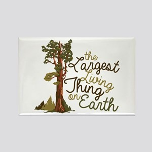 Largest Living Thing Magnets