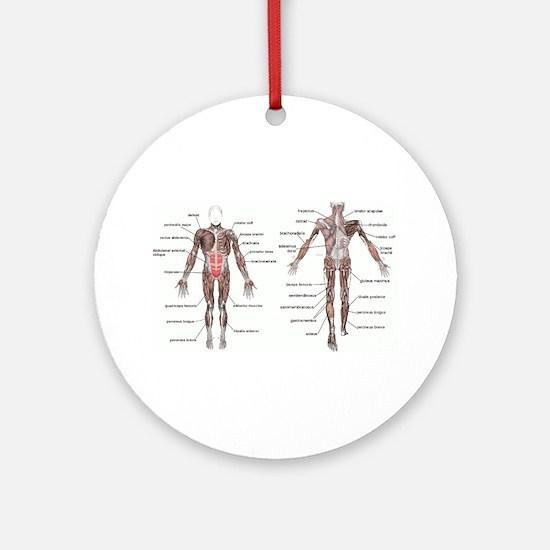 Unique Muscle Round Ornament