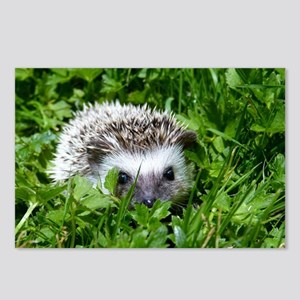 Scrapper the Hedgehog Postcards (Package of 8)