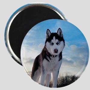 Husky Dog Outdoors Magnets
