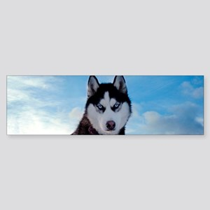 Husky Dog Outdoors Bumper Sticker