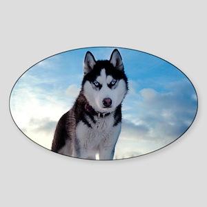 Husky Dog Outdoors Sticker