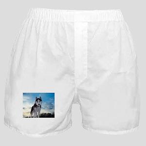 Husky Dog Outdoors Boxer Shorts