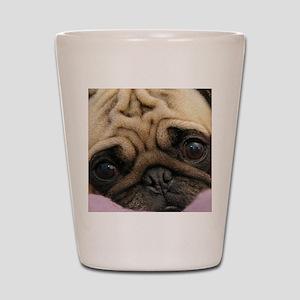 Cute Pug Shot Glass