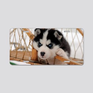 Husky puppy 2 Aluminum License Plate