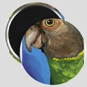 Senegal Parrot Magnets