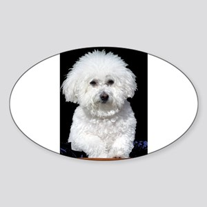 Fifi our Bichon Frise Oval Sticker