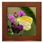 Clouded Sulfur Butterfly on Ironweed Framed Tile