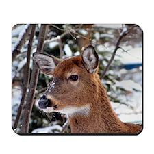 Whitetail Deer 2 Photograph Mousepad