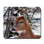 Whitetail Deer 2 Photograph Mousepad