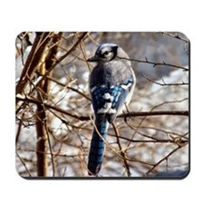 Blue Jay Original Photograph Mousepad