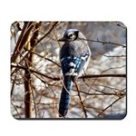 Blue Jay Original Photograph Mousepad