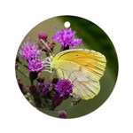 Clouded Sulfur Butterfly on Ironweed Ornament (Rou