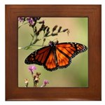 Monarch Butterfly on Ironweed Framed Tile